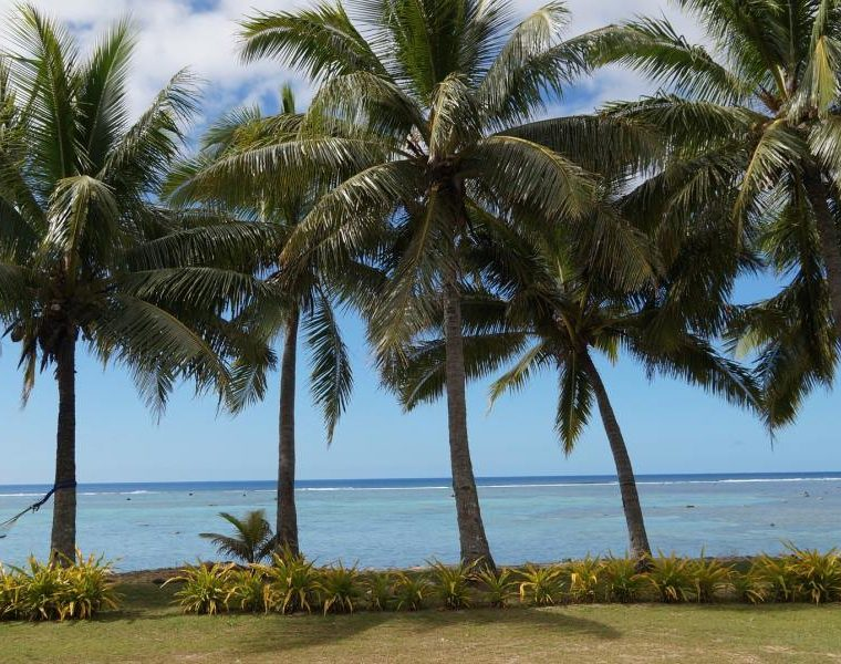Palmen, Reiseziel Cookinseln