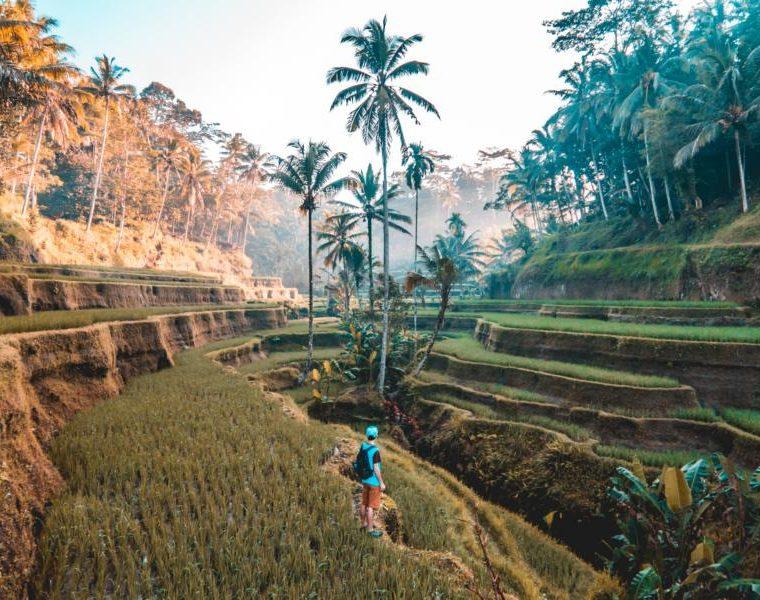 Tegallang Reisterrassen, Bali, Indonesien Reisen