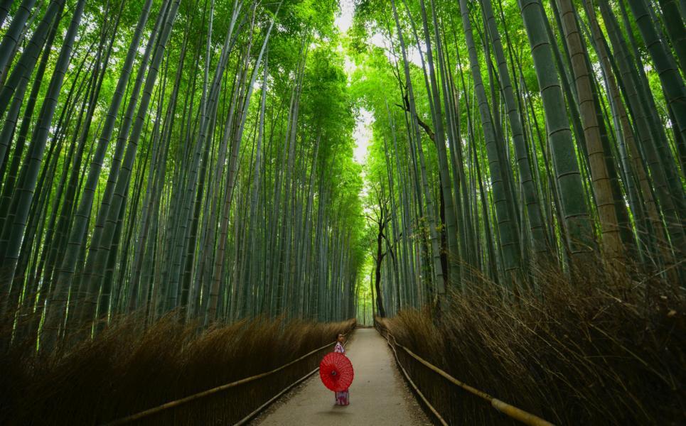 Bambuswald Arashiyama, Kyoto, Japan Reisen
