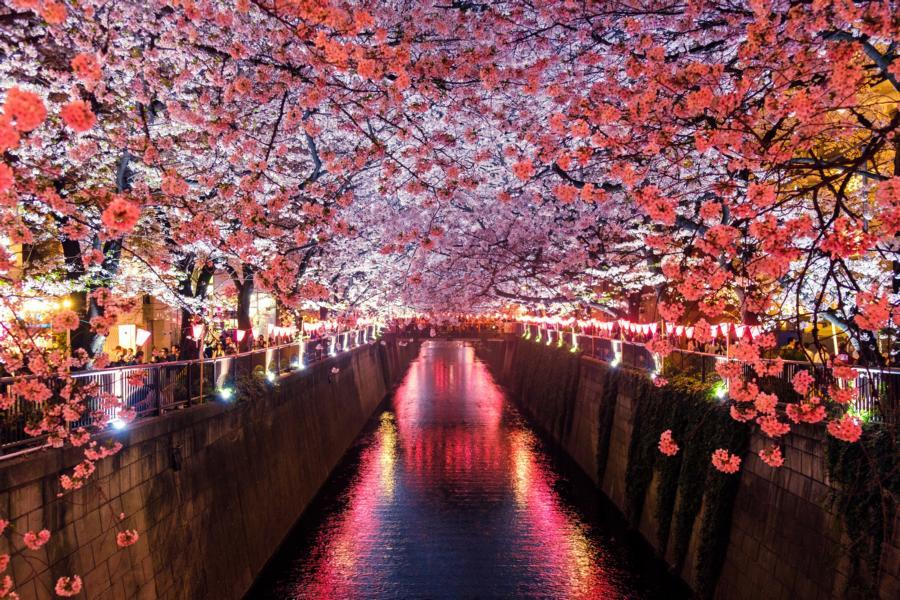 Kirschblüte in Matsuno, Japan Reisen