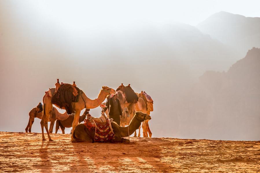 Kamele in der Wüste, Jordanien Reisen
