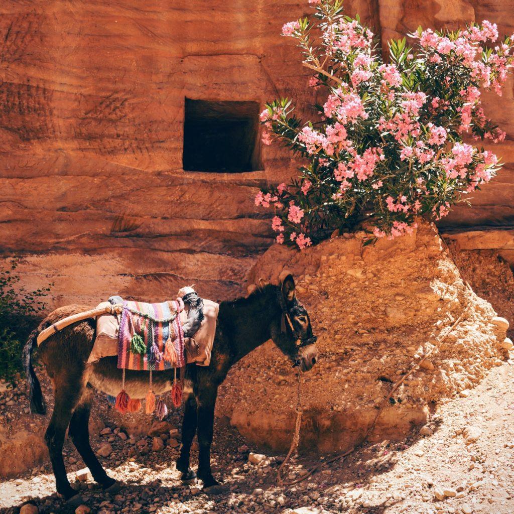 Wadi Musa, Jordanien Rundreisen