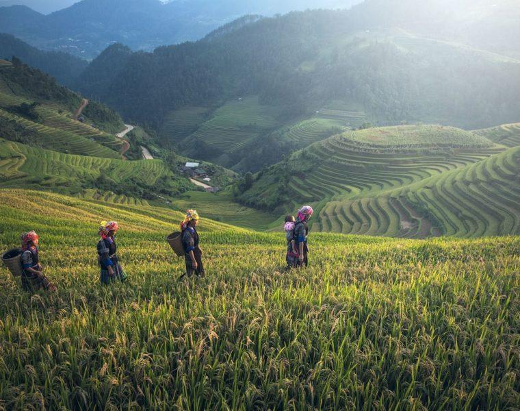 Reisterassen, Laos Rundreise