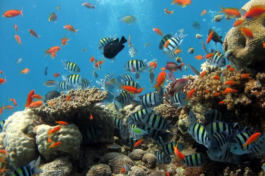 Korallenriff, Malediven Rundreise
