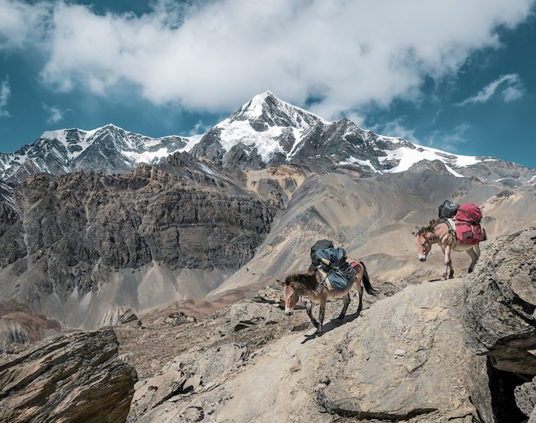 Berge, Packesel, Nepal Rundreise
