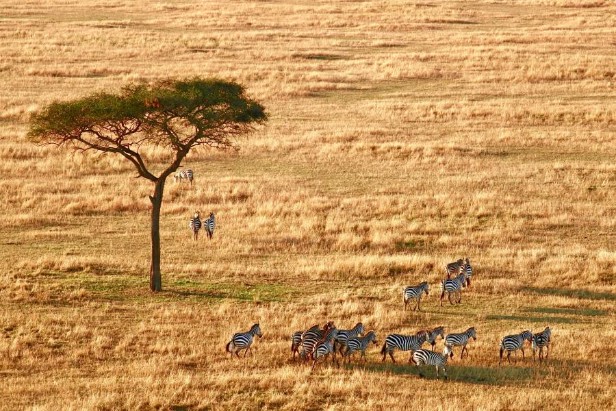 Zebras, Südafrika Rundreise