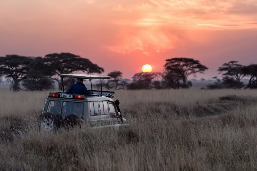 Safari, Tansania