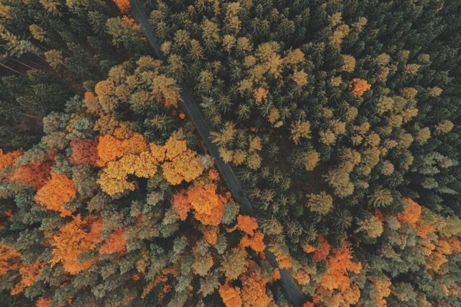 Koberovy Wald, Tschechien Rundreise