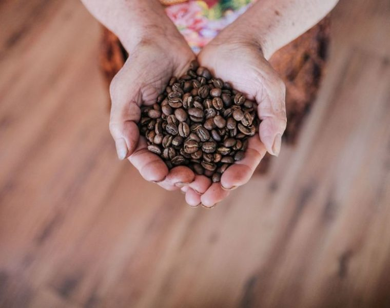 Kaffeebohnen, Bolaven Plateau in Laos