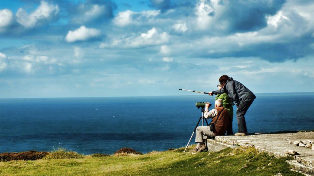 Whale Watching in Europa, Festland