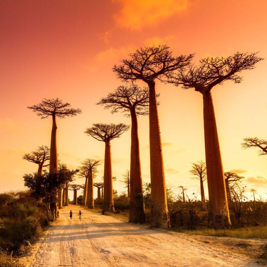 Madagaskar Urlaubsziel